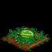 Super Watermelon 66