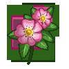 Dog Rose-icon