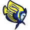 Emperor Angelfish-icon