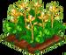 Fairy Rhubarb 100