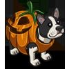 Pumpkin Terrier-icon