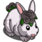 Black Rose Rabbit-icon