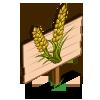 Durum Wheat Mastery Sign-icon