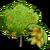 AlmondTree-icon