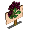 Elderberry Mastery Sign-icon