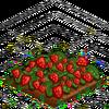 Strawberries-super