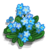 Forget-Me-Not-icon