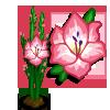 Pink Gladiolas-icon