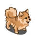 Pomeranian-icon