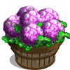 Purple Cauliflower Bushel-icon