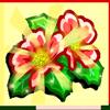 Wild Poppy-icon