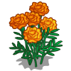 Orange Marigolds-icon