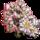 Star Magnolia Tree-icon