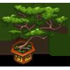 Bonsai Tree-icon
