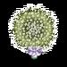 Babys Breath Tree-icon