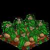 Potatoes-bloom