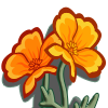 Golden Poppies-icon