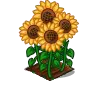 Perfect Sunflower-icon
