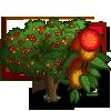 Chinese Strawberry-icon