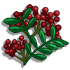 Sichuan Pepper-icon