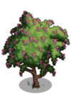 Amherstia Tree1-icon