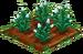 White Carnation 66