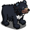 Asian Black Bear-icon.png