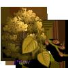 Dahurian Birch Tree-icon
