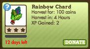 Rainbow chard1
