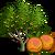 ApricotTree