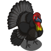 Australian Brush Turkey-icon