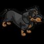 Dachshund Adult Black-icon