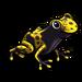 Poison Dart Frog-icon