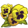 Yellow Pansy Full Bloom-icon