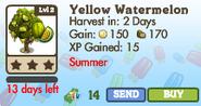 Yellow Watermelon Tree Market Info (June 2012)