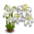 Kerry Lily Full Bloom-icon