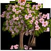 Giant Summer Cherry Tree-icon