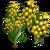 Golden Wattle Full Bloom-icon