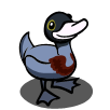 Blue Duck-icon