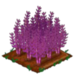 Purple Asparagus 100
