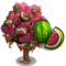 Red Watermelon Tree-icon