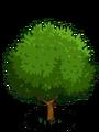 Wild Cashew1-icon