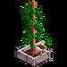 Cocoa Plant-icon