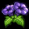 Black Velvet Petunia-icon