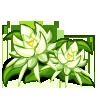 Night Cereus-icon