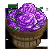 Purple Dianthus Bushel-icon