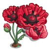Soho Oriental Poppy Full Bloom-icon