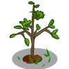 Mystery Seedling-icon
