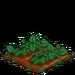 Straspberry 66