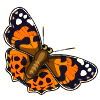 Coll Painted Lady-icon